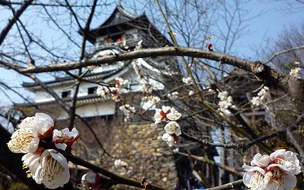 犬山城 - Inuyama Castle